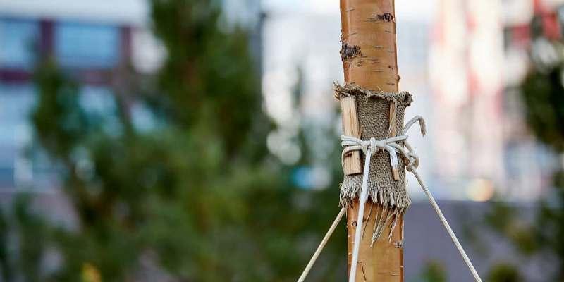 Оформить заявку на именное дерево в Москве можно до 15 июня. Фото: М. Денисов mos.ru