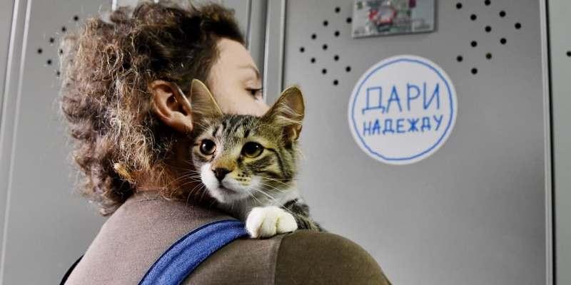 Новых хозяев в столичных приютах ждут более 17 тысяч животных. Фото: mos.ru
