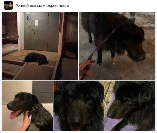 Найденный у метро «Беломорская» пес вернулся домой. Скриншот группы «Речной вокзал и окрестности» социальной сети «Фейсбук»